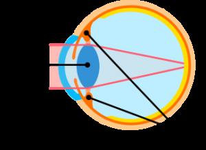 視力 目の疲れ